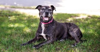 """Family Who Adopted Ailing Senior Dog: """"…It's Worth It."""""""