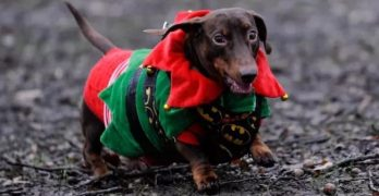 WATCH: Christmas Weenies On Parade!
