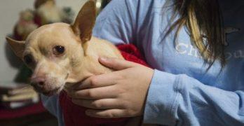 Frodo's Friend: Good Samaritan Picks Up Vet Bill For Little Girl's Ailing Dog