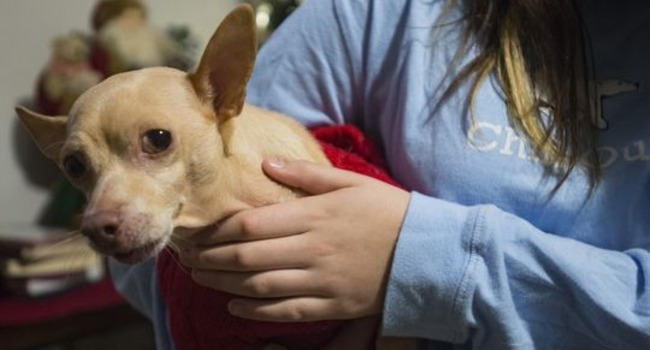 Frodo's Friend: Good Samaritan Picks Up Vet Bill For Little Girl's Ailing Dog