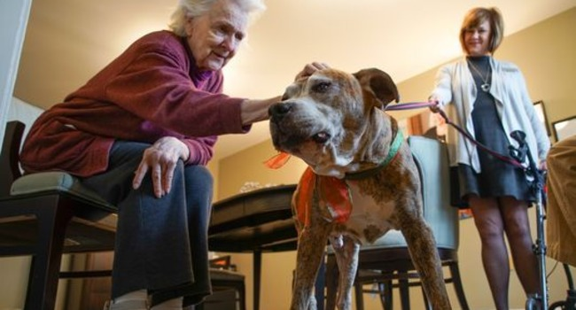 Aging Rescue Finds The Perfect Forever Home Filled With Love