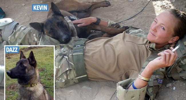 U.K. Military Dogs Saved From Euthanization After Public Outcry