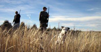 Dog Steps On Shotgun, Shoots Hunter