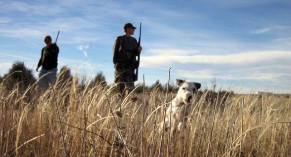 Canine Steps On Shotgun, Shoots Hunter