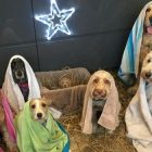 UK Dog Groomer's Nativity Recreation Goes Viral