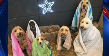 UK Dog Groomer's Nativity Recreation Goes Viral