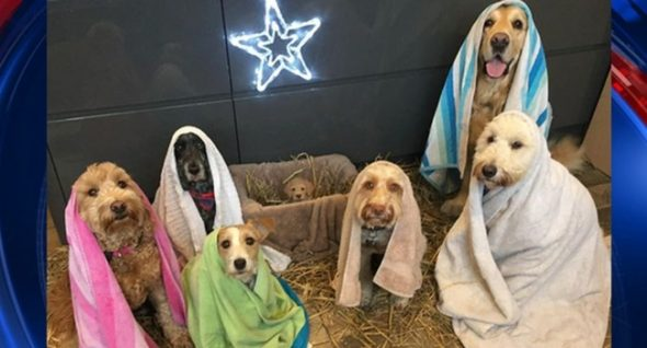 UK Canine Groomer's Nativity Recreation Goes Viral
