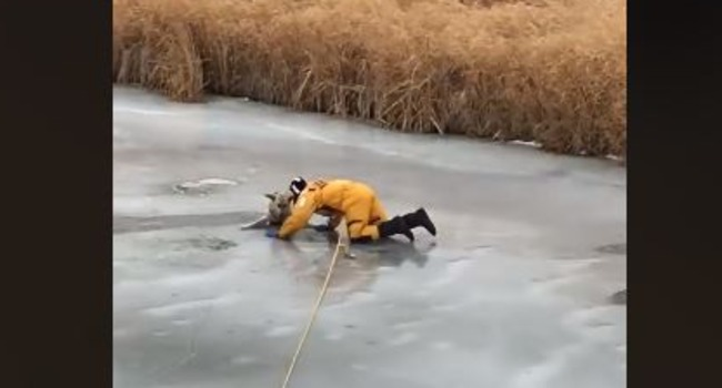 Video of Dog Being Saved From Icy Creek Will Melt Your Heart