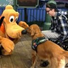 Viral Video: Service Dog With Stuffed Pluto At Home Meets The Real Deal at Disney!