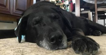 SPECIAL PUPDATE! One Year Later, The Dog Who Spent His First 15 Years At The End of a Chain Has A Bed In Every Room