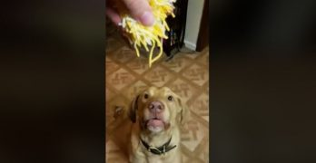 Dog Scarfing Cheese Is The Video Cure For Mondays