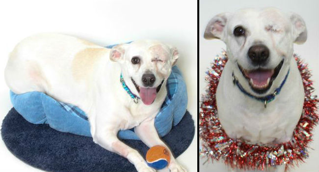 LWD Adoptable Dog of the Day: Adorable Isabella Wants To Wink At You Forever!