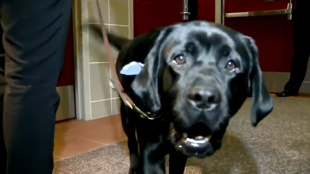 Therapy Dog Provides Comfort to Victims at Larry Nassar Sentencing