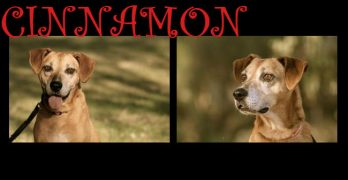 Sweet Cinnamon Is Ready To Add Spice to Someone's Life