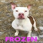 Ready For Heartwarming! Dog Found Frozen To The Ground Now Awaits Adoption
