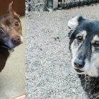 Harley & Zoe Lost Their Humans And Their Homes. Let's Help Them Find New Ones.