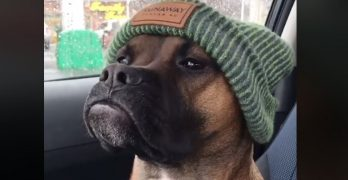 Need More Proof That Life With Dogs Is The Best? Watch This … And Smile!