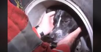 This Brave Girl Endured A Scary Rescue After Getting Her Head Stuck In A Tire