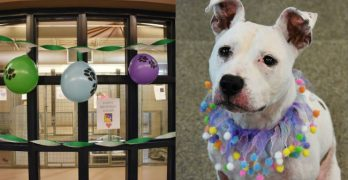 Lovely Lilla's Been Waiting A YEAR For Her Forever Home. Bring Her Home For Her Next Birthday!