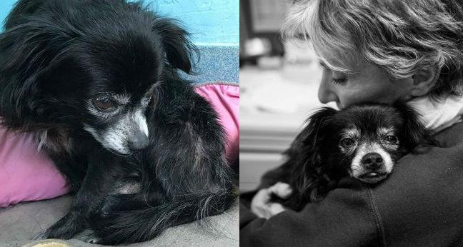 Tiny Negra Came To The Shelter Sad. And Angry…. Until Somebody Hugged Him.
