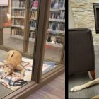 """Sad"" Library Dog Goes Viral When No One Shows For His Event"