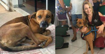 Loyal Dog Keeps Months-Long Vigil Outside Hospital Where His Best Friend Died