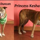 Icy Eyes, Warm Hearts: Meet Adoptables Duncan & Princess Kesha
