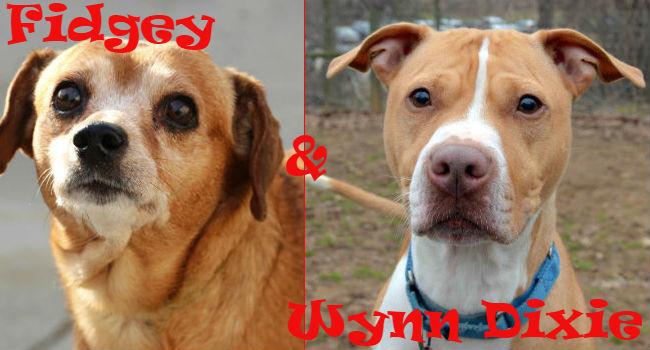 Adoptable Odd Couple: Fidgey & Wynn Dixie!