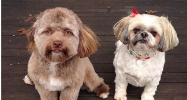 Internet Loses Its Mind Over Yogi, Dog With Human-Like Face
