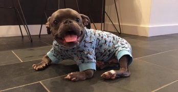 Pit Bull With Dwarfism Has The Best Dad Ever!