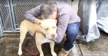 Heartbroken Homeless Man Hoped To Find A Foster For His Dog … Instead, He Found A Home!