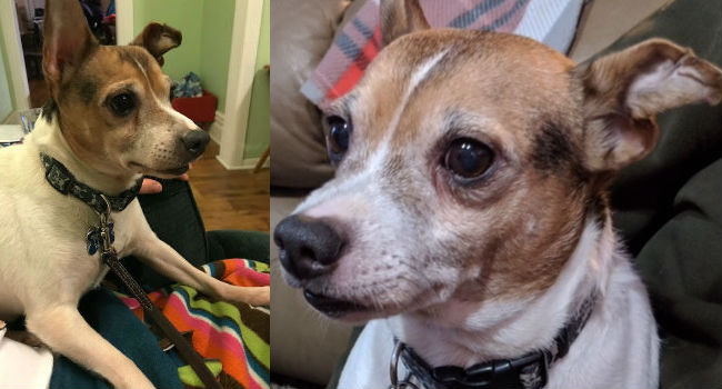 ADOPTABLE! Mojo Recently Lost His Owner; Now He's Learning To Love Again