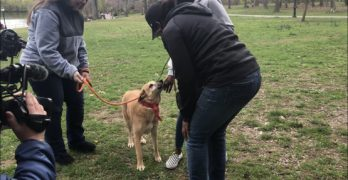NYC Woman Reunites With Dog Three Years After She Went Missing
