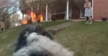 Caught On Video: Hero Cop in VA Rescues Family Dog From Burning Home