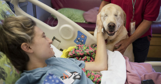 This Blind Therapy Dog Helps Children in the Hospital
