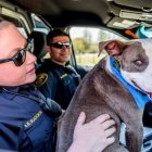 "Lucky Shelter Pup Becomes ""K-9 for the Day!"""