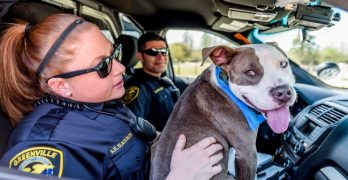 """Lucky Shelter Pup Becomes """"K-9 for the Day!"""""""