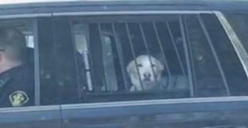 """Bad-boy dog in Canada """"Arrested"""" for Picking Fight With Deer"""