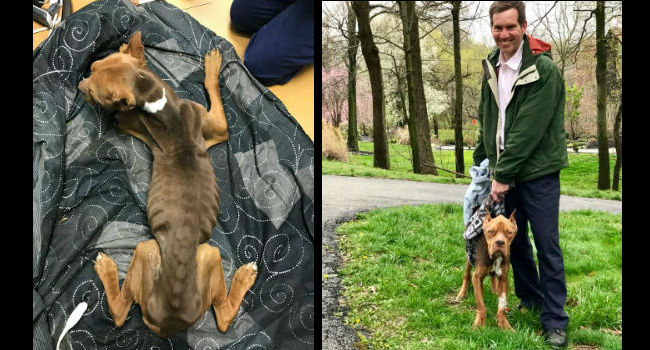 Abandoned Philly Dog Named for Rocky's Fighting Spirit After Being Left to Die