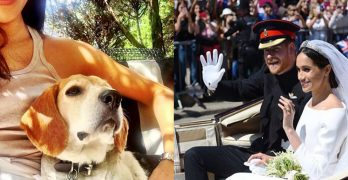 Royal Rescue! Once a Kentucky stray, Guy the beagle now lives at Kensington Palace