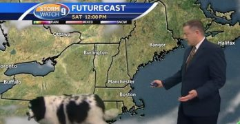 Forecast calls for shedding! Dog casually strolls through live weather report