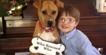 Jonny & Xena: Boy with autism has an incredible bond with his rescue dog