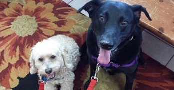 Sebastian & Willie are beautiful, bonded boys who love attention, fetch and each other. (Adopt them!)