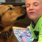 This 6-year-old boy has helped save more than 1,000 dogs from kill shelters