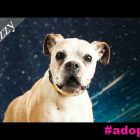 "Izzy's Ready For a Forever Home To Call Her Own. ""Izzyou"" Ready To Help Her?"