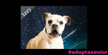 """Izzy's Ready For a Forever Home To Call Her Own. """"Izzyou"""" Ready To Help Her?"""