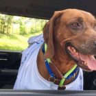 A network of dog-loving volunteers coordinated this lost pup's 2,000-mile journey home.