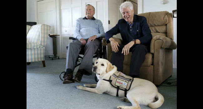 Former President Bush welcomes new service dog to Kennebunkport compound