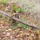 Super-size it! Dog finds the best stick ever!