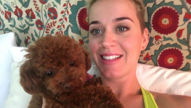 "Katy Perry praises assistant who saved her tiny dog's life: ""You're a gosh-darn American hero!"""